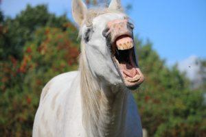 horse-yawn