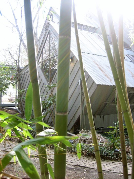 bambooandhouse