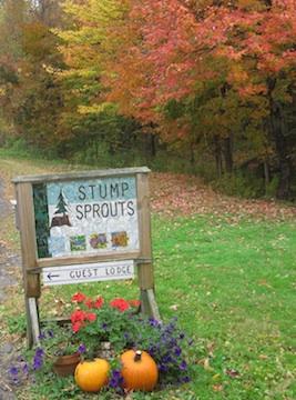 stumpsprouts2